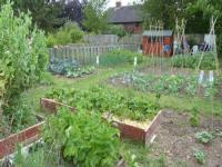 Stratford allotment